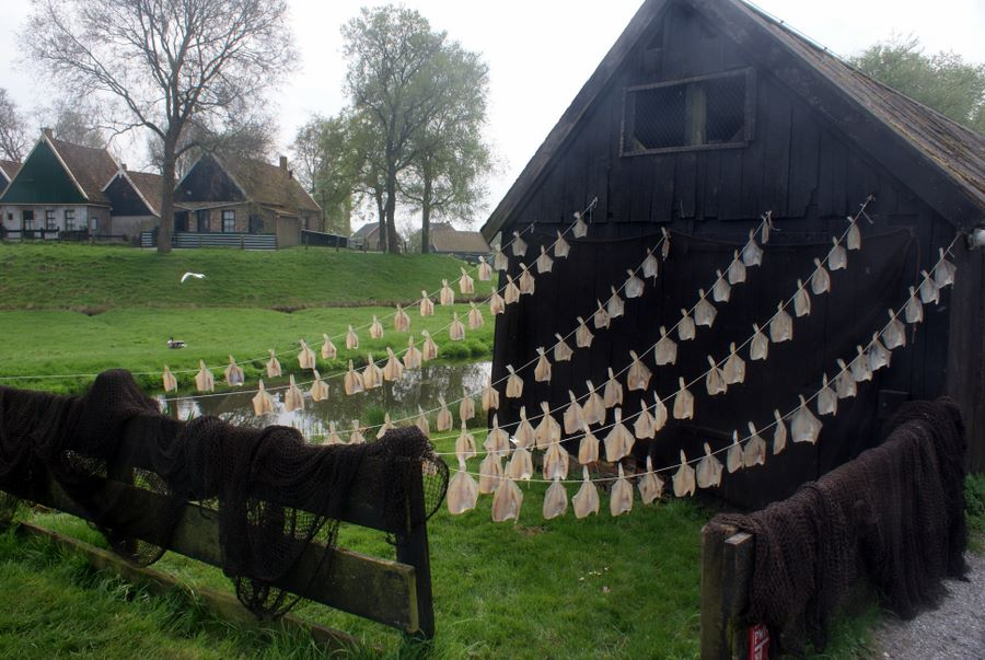 Fish drying demonstration at the Zuiderzee Museum in Enkhuizen